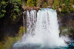 Koosah падает на реку McKenzie в Орегоне Стоковые Фото