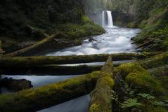 Koosah понижается водопад - национальный лес Willamette - Орегон стоковое изображение rf