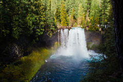Koosah cade sul fiume di McKenzie nell'Oregon fotografia stock
