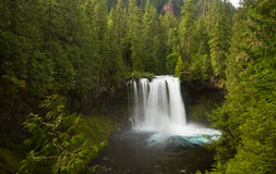 Koosah fällt auf den McKenzie-Fluss, Oregon, USA Lizenzfreie Stockfotografie