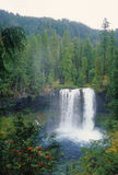 Koosah Falls Royalty Free Stock Photography