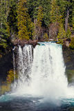 Koosah Falls on the McKenzie River in Oregon Stock Images