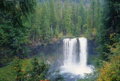 Koosah Falls, Oregon Stock Images