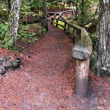 Koosah Falls Trail. A wet dirt trail covered in pine needles in the Willamette National Forest in Linn County Oregon with a sturdy wood railing leads to Koosah Royalty Free Stock Photography