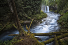 Koosah Falls Waterfall - Willamette National Forest - Oregon. The cleanest air I`ve ever breathed Stock Photos