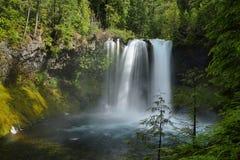 Koosah nedgångar i Mc kenzie passerar, Oregon Royaltyfria Bilder