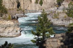 Kootenai cai no rio de Kootenai em Montana do noroeste foto de stock