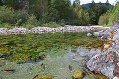 Kootenay flod Royaltyfri Foto