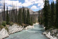 kootenay park narodowy Obraz Royalty Free