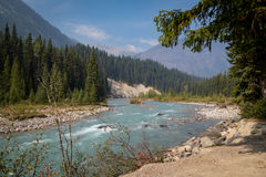 Rockies river scene. Kootenay River scene in the Rockies area of British Columbia, off the I93, Canada royalty free stock photography