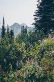 Kootnenay风景夏天高涨 免版税库存图片