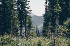 Kootnenay风景夏天高涨 免版税库存照片