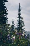 Kootnenay风景夏天高涨 免版税图库摄影