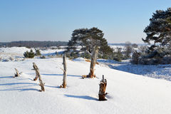 Kootwijkerzand covered with snow. Royalty Free Stock Images