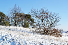 Kootwijkerzand covered with snow. Stock Photography