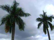 Kop palmen, en hemel stock afbeelding