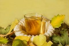 Kop thee met de herfstbladeren Seizoen van Onderwijs Kop op een gebreide schotel, een symbool van warmte en comfort Stock Foto's