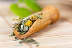 Kop van groene thee met kruiden en suikergoed Royalty-vrije Stock Foto