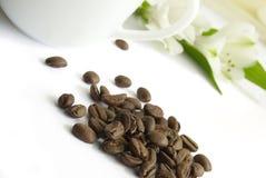 Kop van koffie en zaad Royalty-vrije Stock Fotografie