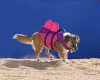 Kopać plażę Zdjęcie Stock