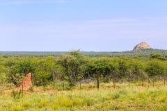 kopa Namibia termit Obrazy Stock
