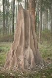 kopa termit Zdjęcia Royalty Free