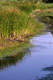 Kopacki Rit Natur-Park Stockbild