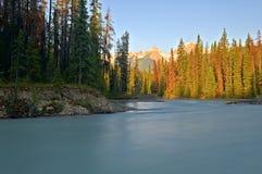 Kopanie Końska rzeka, Yoho park narodowy obraz stock