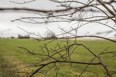 Kopenhagen, Dänemark - Baumaste an einem regnerischen Tag Stockfotografie