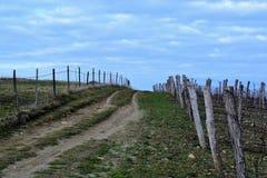 Koper Słoweński Istra - Wycieczkujący i jechać na rowerze Obrazy Stock