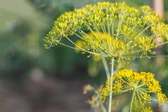 Koperkowa roślina Obrazy Royalty Free