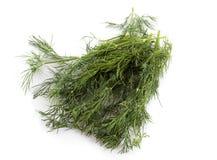 koperkowy ziele Obrazy Stock