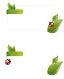 kopertowa biedronki liść wiosna Zdjęcie Stock