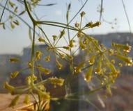 Koperu kwiat Zdjęcia Royalty Free