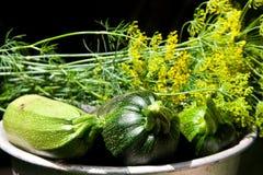 koperu ogródu żniwa zucchini Obrazy Royalty Free