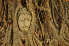 Kopf Buddha Stockbild
