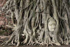 Kopf der Buddha-Statue Stockfotografie