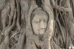 Kopf der Buddha-Statue stockfoto