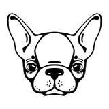 Kopf der französischen Bulldogge lokalisiert auf weißem Hintergrund Auch im corel abgehobenen Betrag Stockfotos