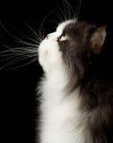 Kopf der Katze Lizenzfreies Stockfoto