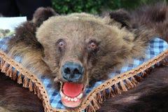 Kopf des Bären Lizenzfreies Stockfoto