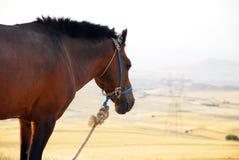 Kopf des braunen Pferds Stockfotos