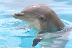 Kopf des Delphins Lizenzfreie Stockfotos