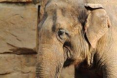 Kopf des Elefanten Stockfoto