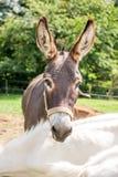 Kopf des Esels Stockfotos