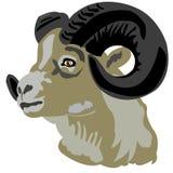 Kopf des Gebirgs-RAM Stockfoto