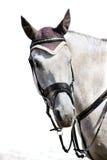 Kopf des grauen sportlichen Pferds Stockbilder