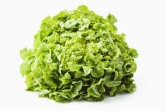 Kopf des Kopfsalates Stockfoto