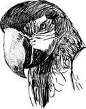 Kopf des Papageien Stockfotografie