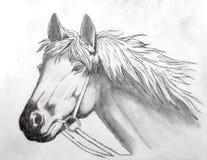 Kopf des Pferds Lizenzfreie Stockfotos